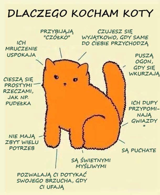 Dlatego właśnie kocham koty ! ;D.