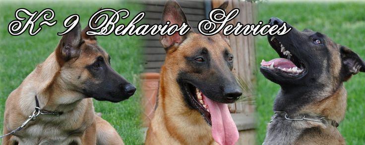 Belgian Malinois Breeder, Working Line Belgian Malinois Puppies For Sale