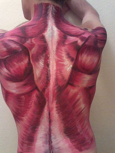 awesome muscle makeup. if only it were that easy to locate muscles