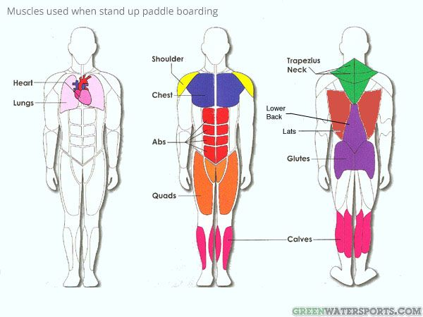 Paddle boarding is a great all over body workout. Head to toe, every muscle is engaged in balancing on the board or during the paddle stroke with the bulk of the effort being done by the body's 'core' muscles.