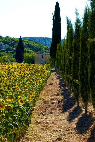 Tuscany countryside, Italy - looks very similar to Sonoma County/Wine Country in California!