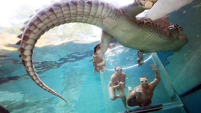 La «jaula de la muerte»: 15 minutos en el agua con un cocodrilo gigante - ABC.es
