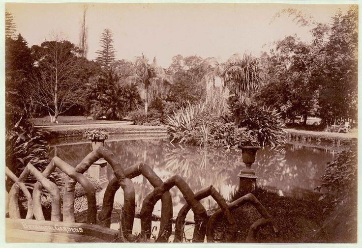 Botanical Gardens, Sydney [showing pond], 1900-1910. PXE 711 / 453 http://acmssearch.sl.nsw.gov.au/search/itemDetailPaged.cgi?itemID=413767
