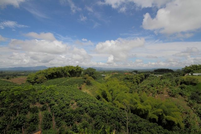 http://www.colombia.travel/es/images/stories/turistainternacional/Adondeir/triangulodelcafe/triangulo/tc-uno.jpg  I absolutely love our coffee fields!