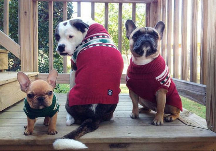 What a great idea! Puppy sweater party helps homeless dogs and cats find forever homes in VA.