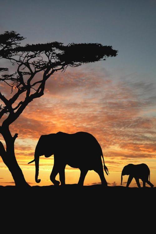 ...PRECIOSA POSTAL DE UN ATARDECER EN LA ÁFRICA SALVAJE; BENDITA SEA LA NATURALEZA Y  A DIOS  SU CREADOR... ❤️  MIGUEL ÁNGEL GARCÍA.
