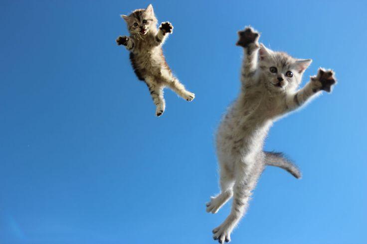 Ces 15 photos devraient vous convaincre que les chats sont en réalité des ninjas...