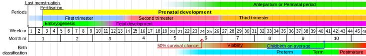 Prenatal development - Wikipedia, the free encyclopedia