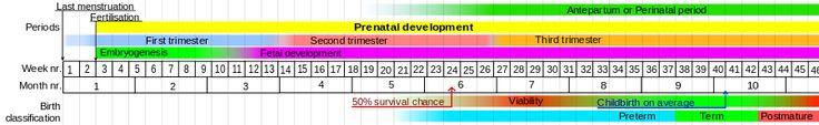 Prenatal development - Wikipedia, the free encyclopedia