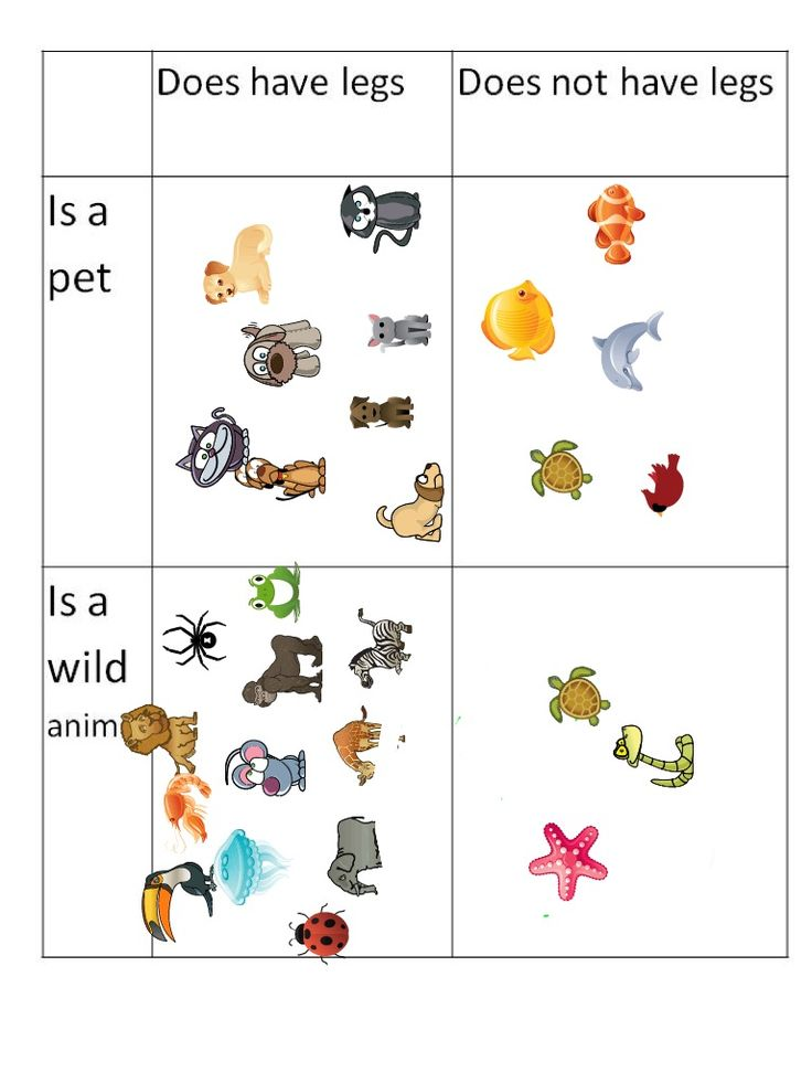 25  best ideas about classifying animals on pinterest