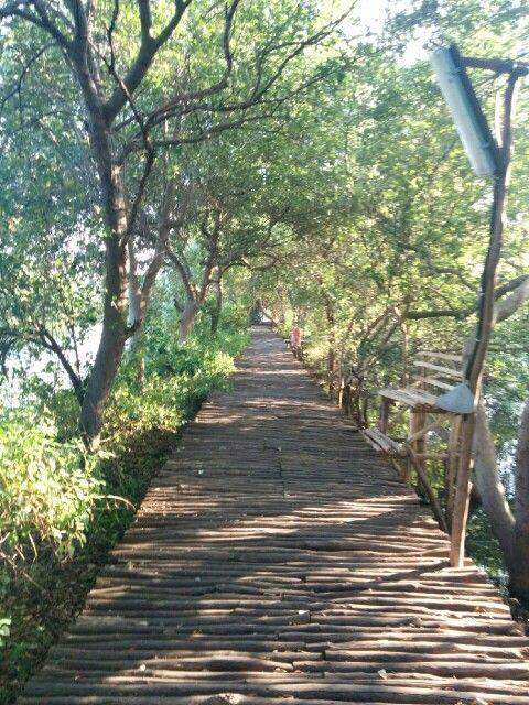 Twa mangrove