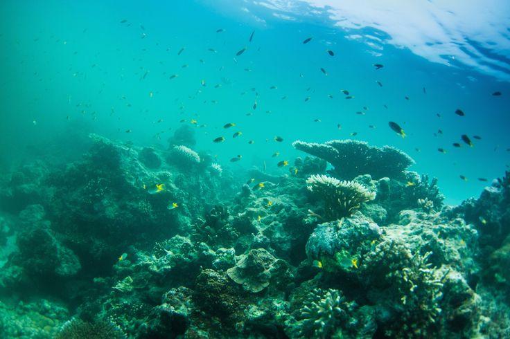 Sumatran Snorkling. . .   Image_ Mick Curley