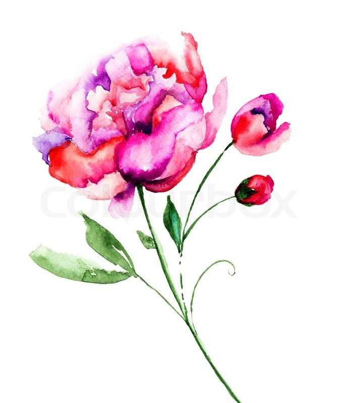 Peony Watercolor Flower Tattoos: Stock Photo 11 M Images High Quality Images For Web