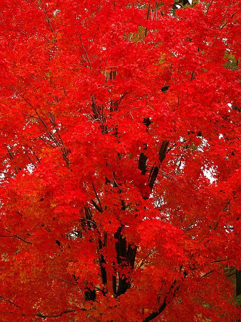 Vibrant fall color.....