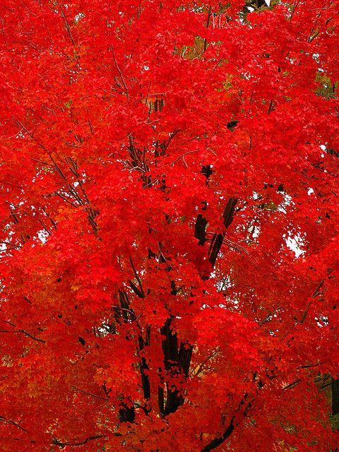 Vibrant fall color.....