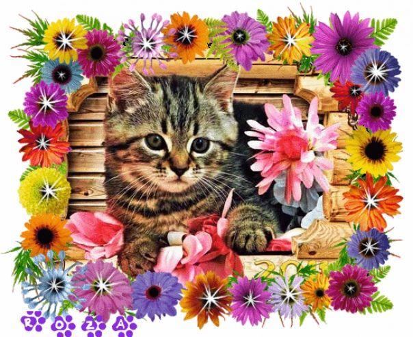 Анимированные поздравления с кошками