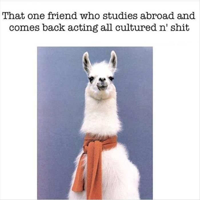 Afbeeldingsresultaat voor llama scarf meme goes abroad