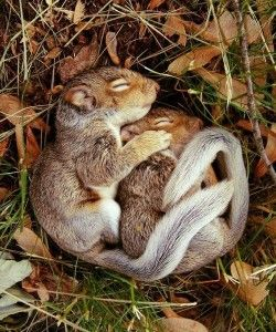 I like how the squirrels are close together to form a ball shape. I also like how the grass and leaves frame around them. Plus they're cute