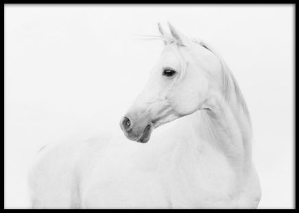 Beautiful poster with black and white photograph of a white horse. Stylish design that fits very nicely with minimalist and Scandinavian décor. This poster is equally magical by itself as it is when it is combined with some of our other prints of similar design. www.desenio.com