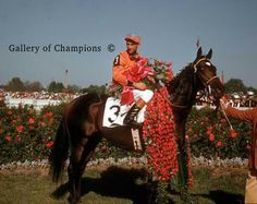 Kauai King(1963)Native Dancer- Sweep In By Blenheim II. 3x5 To Sweep. 16 Starts 9 Wins 2 Seconds 1 Third. $381,397.  Won 1966 Ky Derby(G1), Preakness(G1), Fountain Of Youth S, 2nd Hutcheson S. Died In 1989.