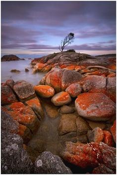 Tasmania  tres  jolie  couleur  de pierre,,,,,**+