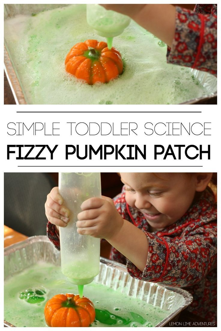 preschool pumpkin science activities 329 best images about for on 527