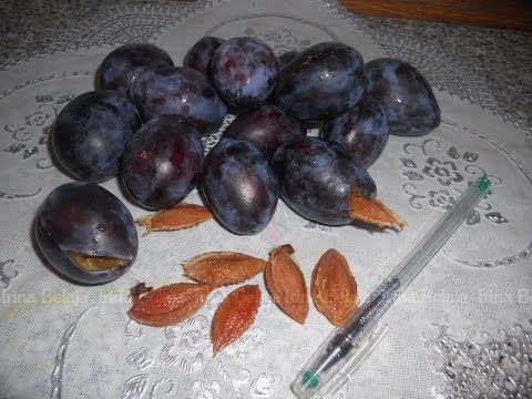 Πόσο γρήγορα αφαιρέστε τους σπόρους από δαμάσκηνα - YouTube    Заготовки   Постила
