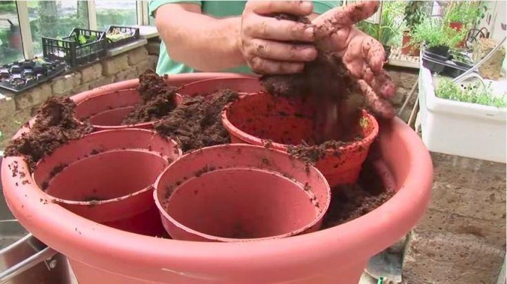 Il dépose five petits pots dans un très gros pots à fleurs! Un professional du jardinage nous révèle une astuce qui fait toute los angeles différence!