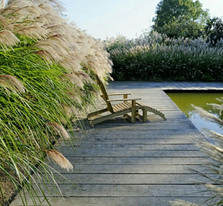 pool mit miscanthus chinaschilf umpflanzt chinaschilf. Black Bedroom Furniture Sets. Home Design Ideas