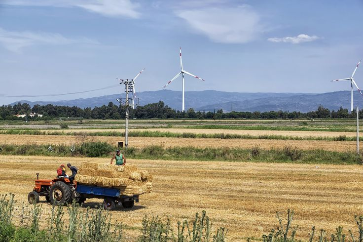 its harvest time.. - it is harvest time for wheat in aegean turkey and seen here is a group of farmers collecting wheat bales from their field with a tractor.at the background windmills are operating to generate power for the national grid line