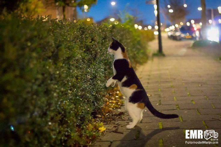 Loveley cat by EMR Photography www.fotomodelmarijn.com