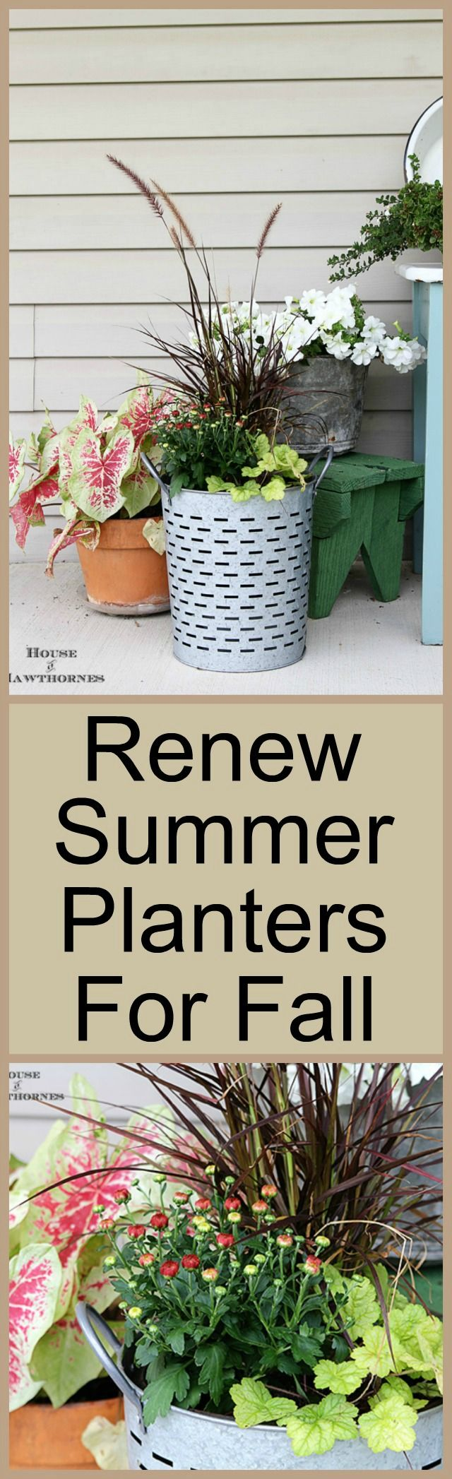 Adding Fall To A Summer Planter Fall ContainersFall Container PlantsContainer FlowersGardening