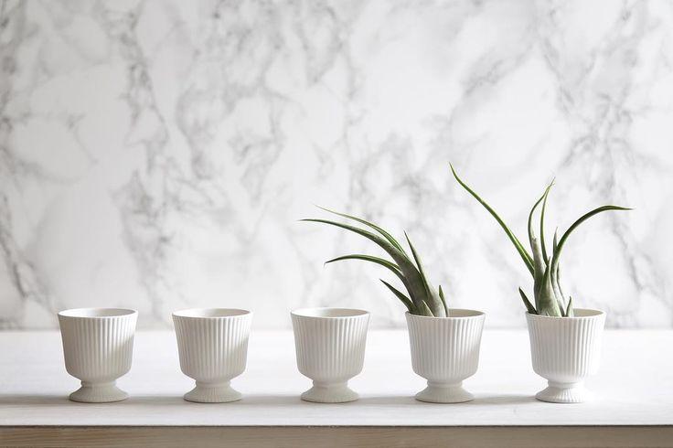 はじめて行った3coinsでエアプランツ連れて帰ってきました🌿  #エアプランツ #エアープランツ #多肉植物 #多肉 #インテリア #シンプル #インテリアグリーン #植物のある暮らし #3coins #photostyling #airplants #cactus #succulent #simple #simplelife #simplethings #simpleoclock #interiordecor