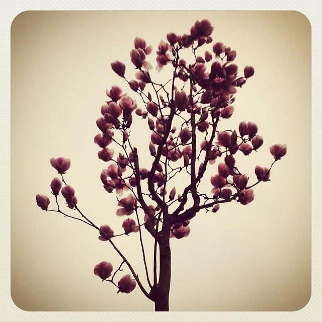 http://instagram.com/marcogirolami#