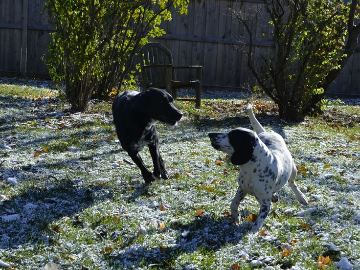 Adopt Mason on Dogs, Dog lovers, Dalmatian rescue