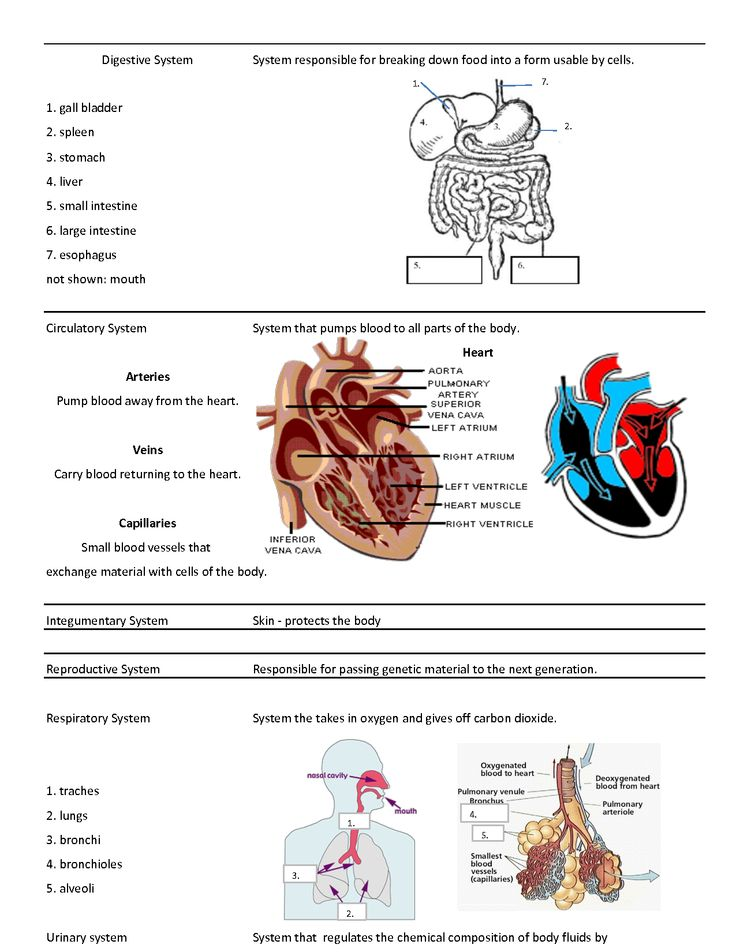 12 systems of the body, what's their function? Flashcards ...