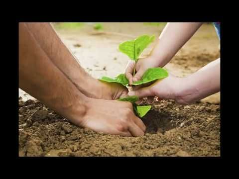 So there is every explanation why you should plant trees around your home. You can utilize of one off collection facilities to clear the dried leaves from the pavement