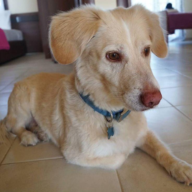 Δεν ειναι πανέμορφος; τον ακολουθειτε; @herculesthedoggr γραψτε του κατι. Τα διαβαζει!!  #happydog #dog #greekdog #traveldog