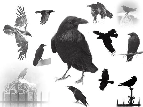 The Raven_s by midnightstouch.deviantart.com on @DeviantArt