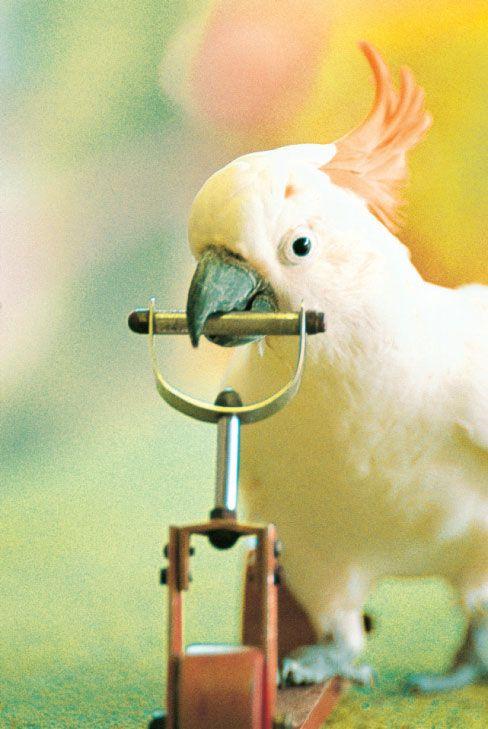 smart bird birds of