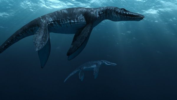 Liopleurodon was a marine reptile measuring in at more than 20 (6m) feet in length. It mostly lived in the seas that covered Europe during the Jurassic period, and it was one of the top predators around. Its jaws alone are believed to have been over 10 feet long – roughly the distance from the floor to the ceiling.