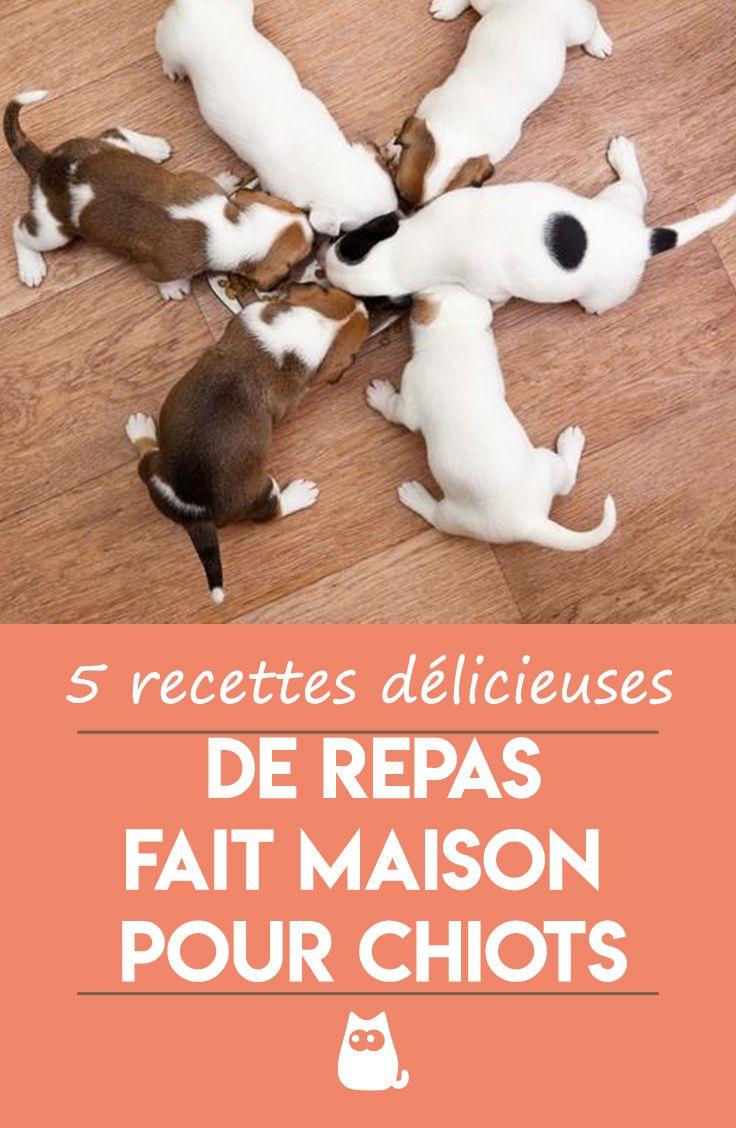 Recettes De Nourriture Maison Pour Chiots Top 5 En 2020 Chiot Adopter Un Chiot Alimentation Chiot