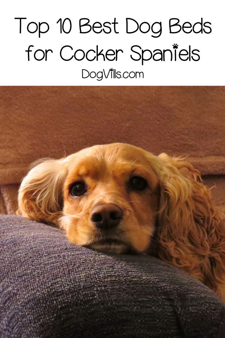 Top 10 Best Dog Beds For Cocker Spaniels Cool Dog Beds Cocker Spaniel Dog Bed