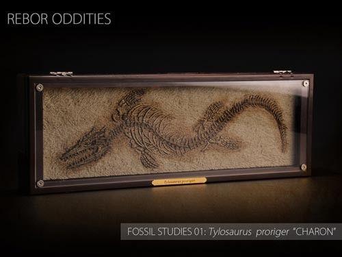 Rebor Oddities Fossil Studies (Tylosaurus proriger)