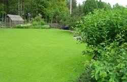 Sliten gräsmatta? Du behöver inte anlägga en helt ny gräsmatta. Med dessa tips kan även den mest hopplösa gräsmatta få ett nytt liv.
