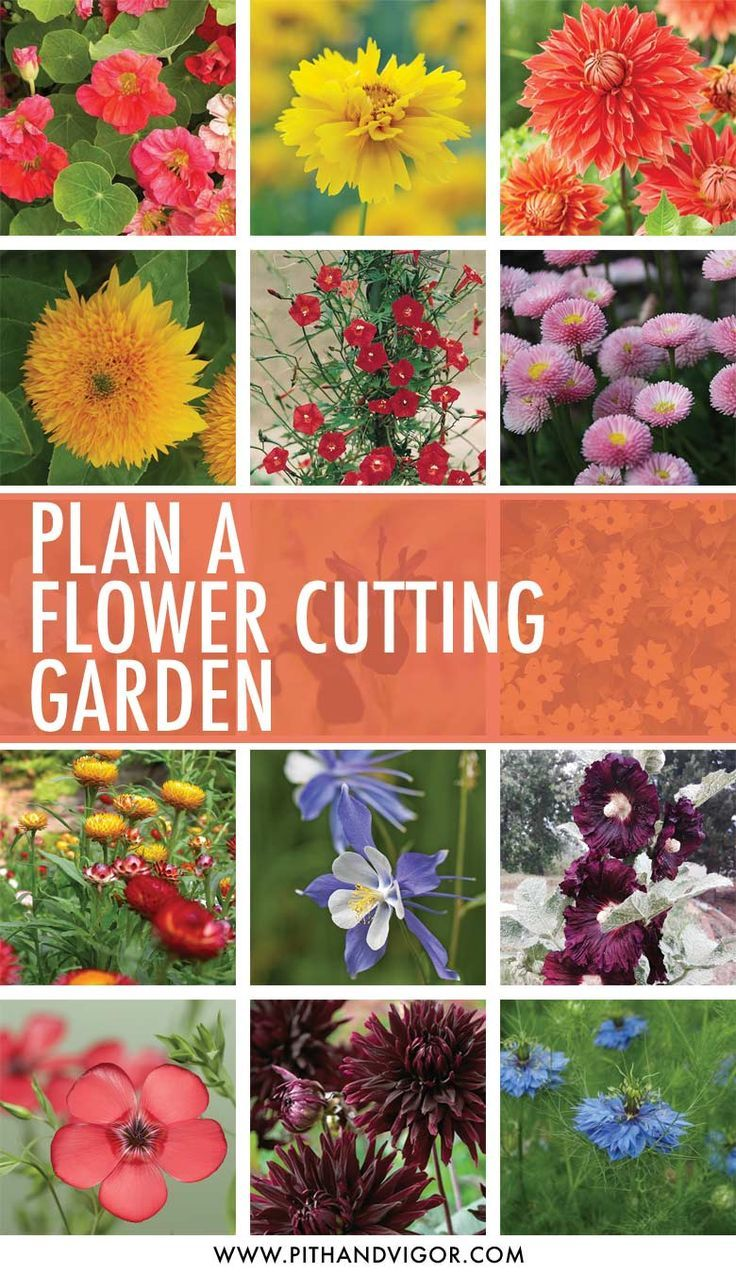 Best 25+ Cut Flower Garden Ideas On Pinterest | Flowers Garden, Spring  Plants And Fall Blooming Flowers