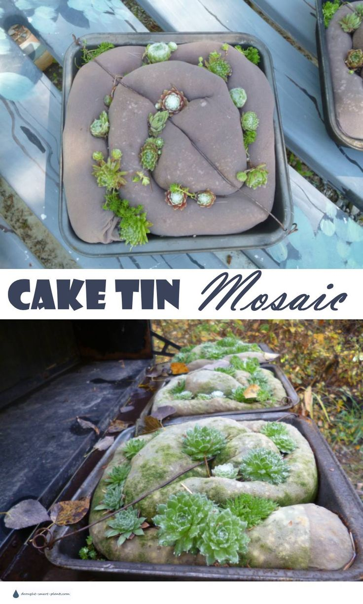 Cake Tin Succulent Mosaic - yes, you can plant succulents into almost anything... Gardening | Garden Art | Succulents