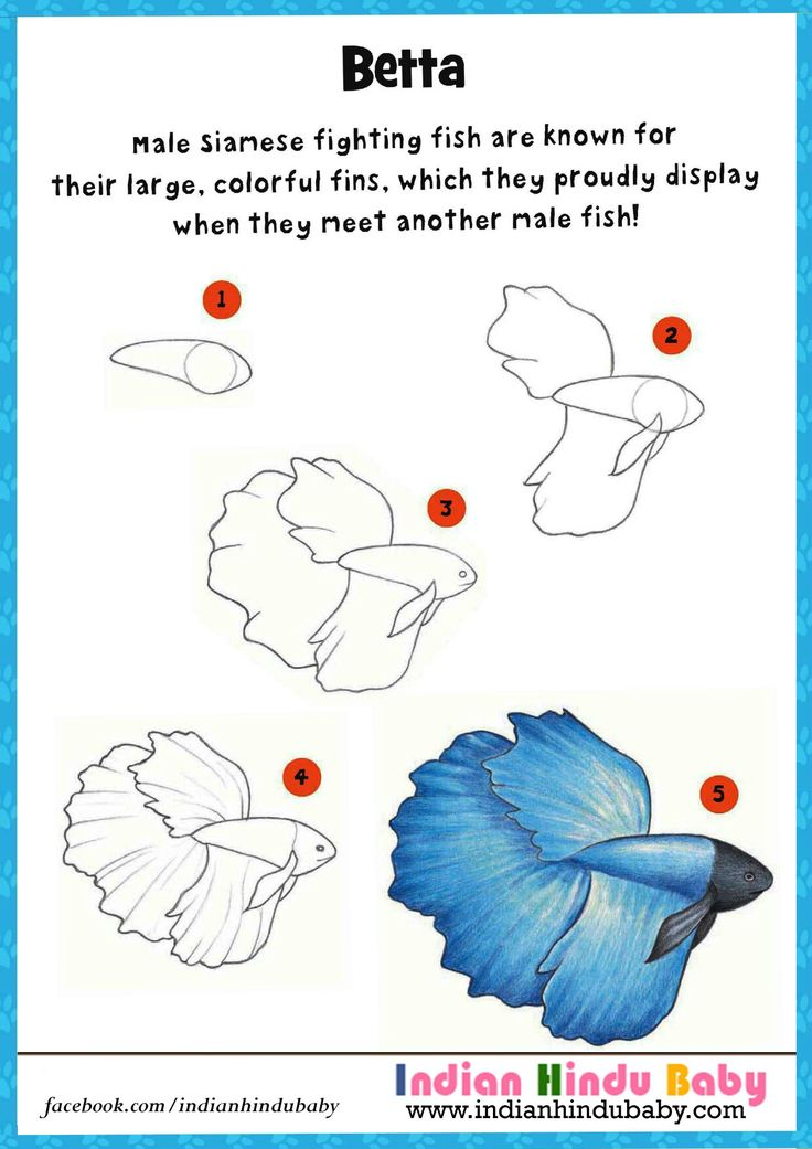 Teach your kid to draw and paint 'Betta' - a fish known for their large colorful fins, with simple drawing tips