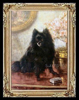 Black Pomeranian Dog  Miniature Dollhouse  Picture