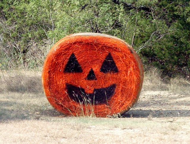Bale of Hay Pumpkin by Pierce Place, via Flickr